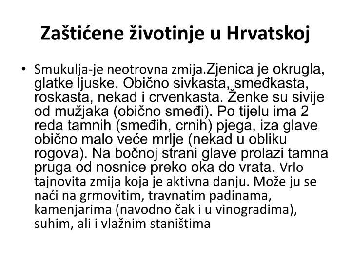Zaštićene životinje u Hrvatskoj