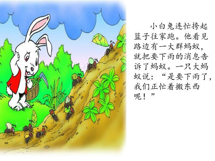 小白兔连忙挎起篮子往家跑。他看见路边有一大群蚂蚁,就把要下雨的消息告诉了蚂蚁。一只大蚂蚁说: