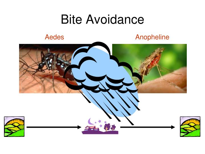 Bite Avoidance