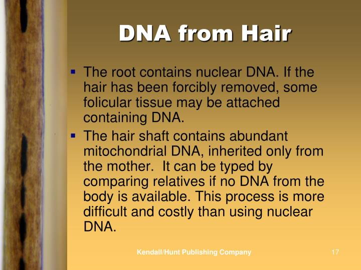 DNA from Hair