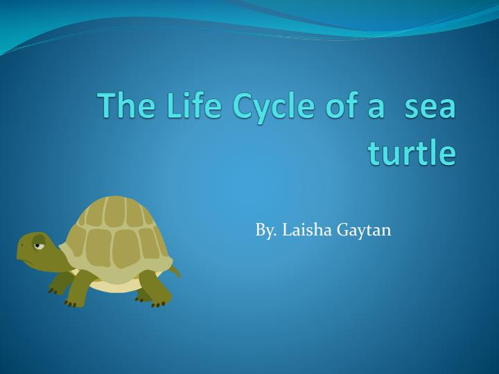 The life c ycle of a sea turtle