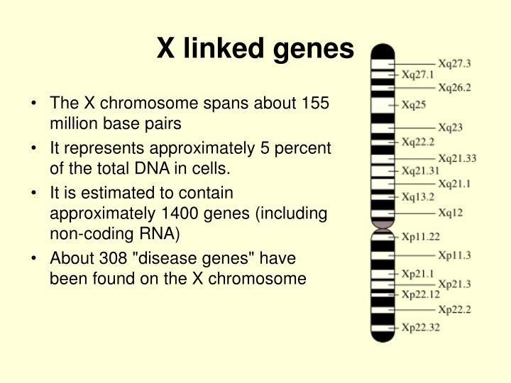 X linked genes