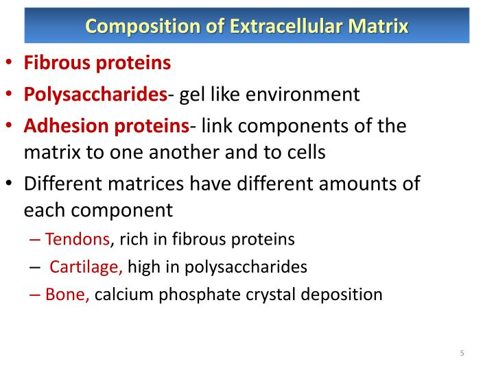 Composition of Extracellular Matrix
