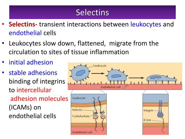 Selectins