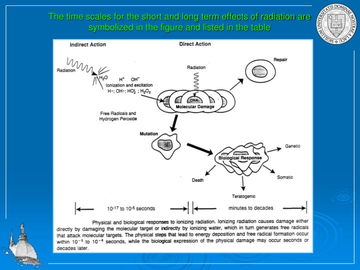 The time scales for the short and long term effects of radiation are symbolized in the figure and listed in the table