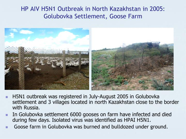 HP AIV H5N1 Outbreak in North Kazakhstan in 2005: Golubovka Settlement, Goose Farm