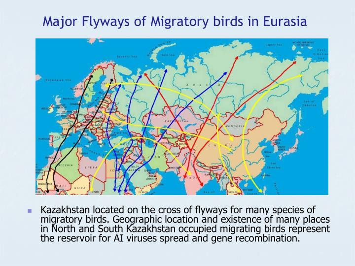 Major Flyways of Migratory birds in Eurasia