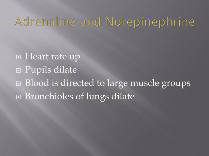 Adrenaline and Norepinephrine