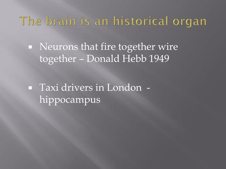 The brain is an historical organ