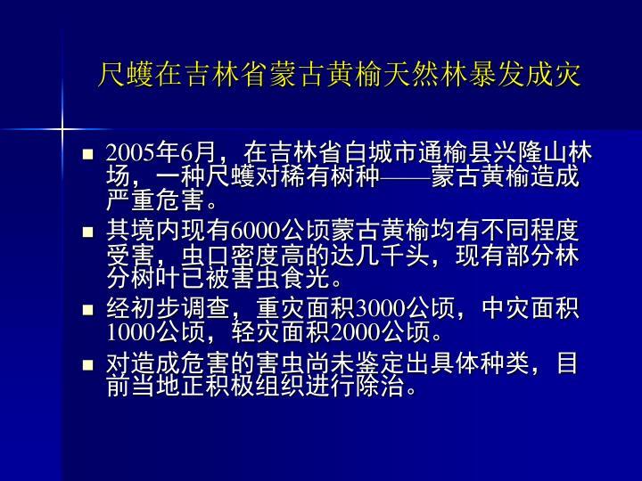 尺蠖在吉林省蒙古黄榆天然林暴发成灾