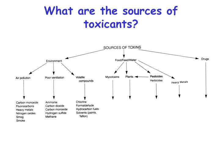 What are the sources of toxicants?