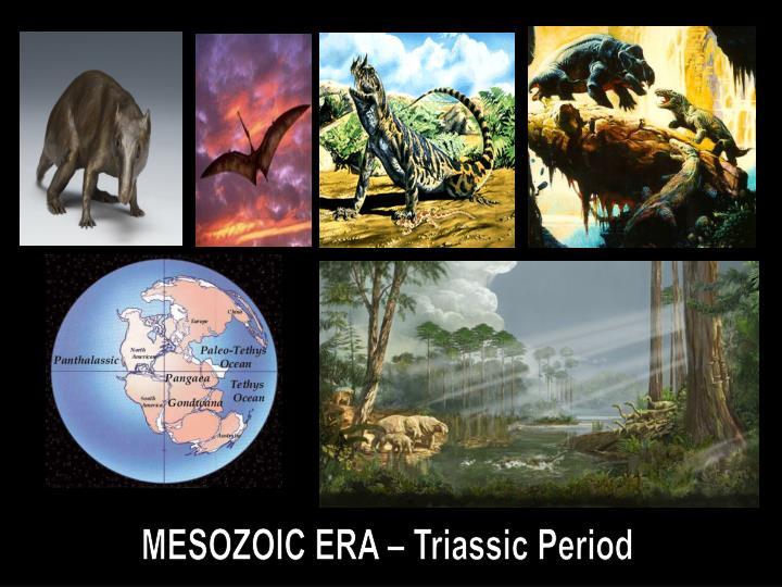 mesozoic era Definition of mesozoic era in the audioenglishorg dictionary meaning of mesozoic era what does mesozoic era mean proper usage and pronunciation (in phonetic transcription) of the word mesozoic era.