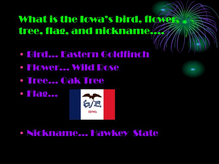 What is the iowa s bird flower tree flag and nickname