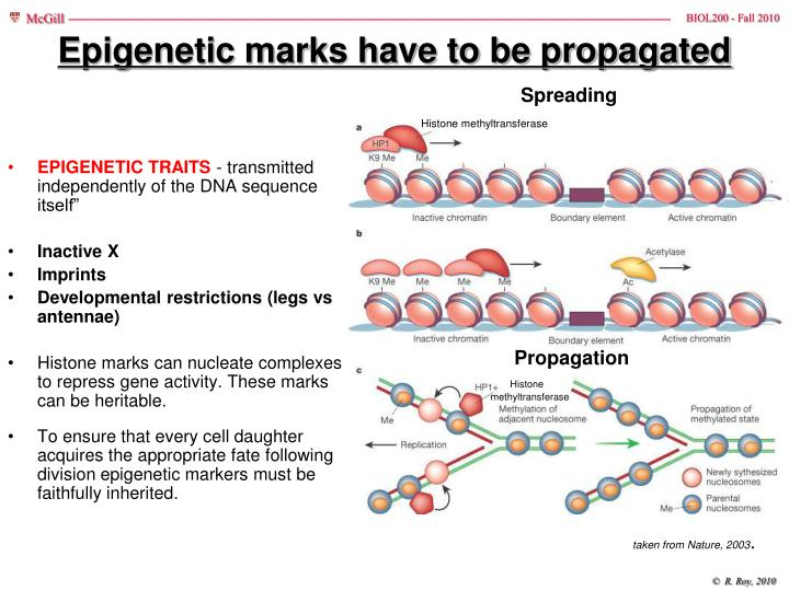 Epigenetic marks have to be propagated