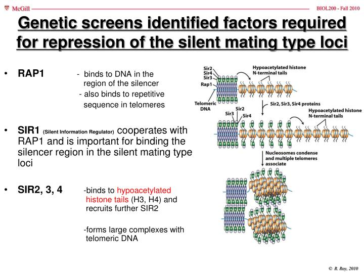 Genetic screens identified factors required for repression of the silent mating type loci