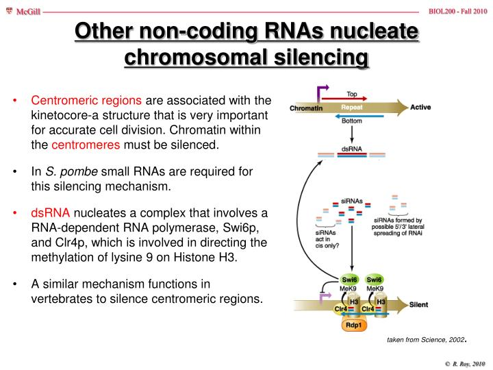 Other non-coding RNAs nucleate chromosomal silencing