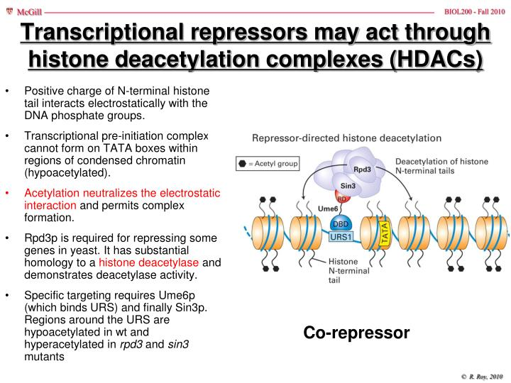 Transcriptional repressors may act through histone deacetylation complexes (HDACs)