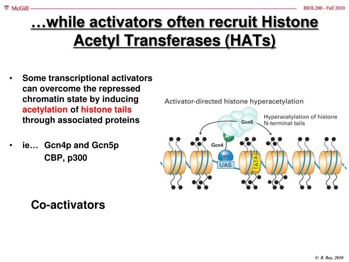 …while activators often recruit Histone Acetyl Transferases (HATs)