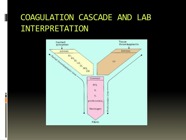 COAGULATION CASCADE AND LAB INTERPRETATION
