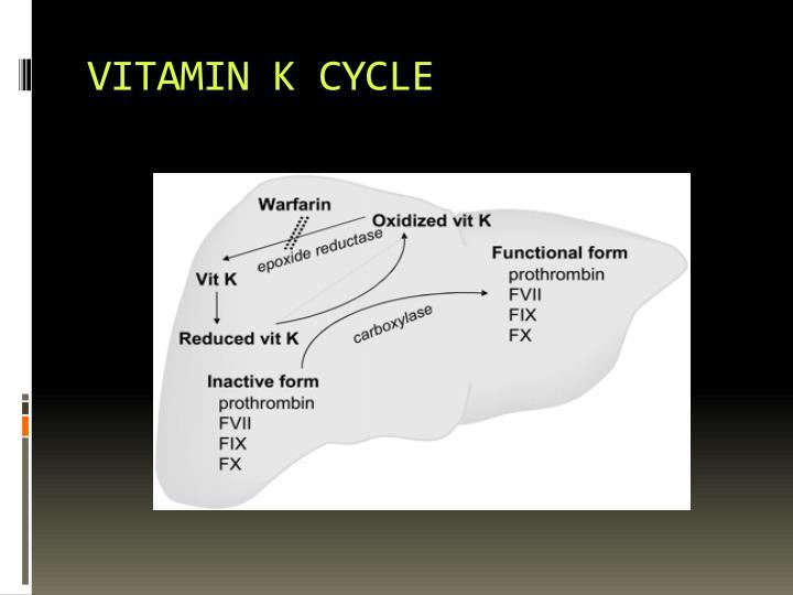 VITAMIN K CYCLE