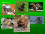 mammals 1