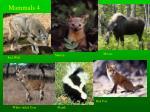 mammals 4