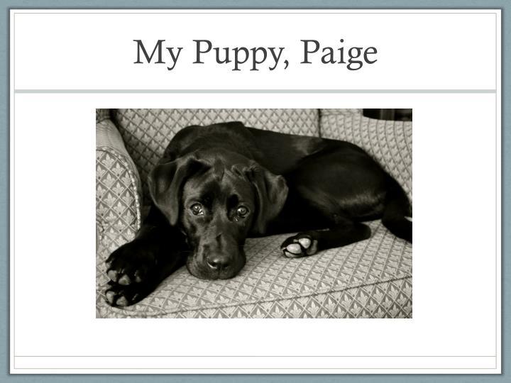 My Puppy, Paige