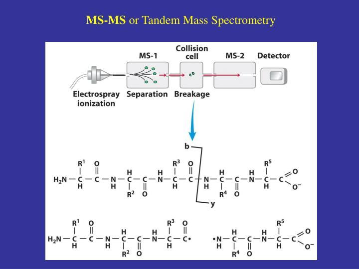 MS-MS