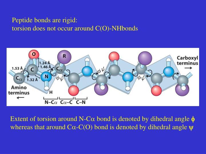 Peptide bonds are rigid: