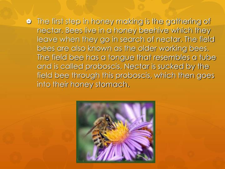 The first step in honey making is the gathering of nectar. Bees live in a honey beehive which they l...