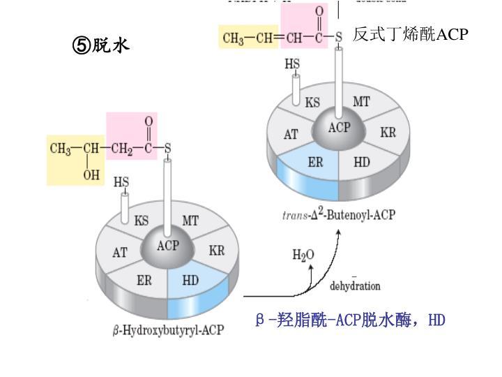 反式丁烯酰