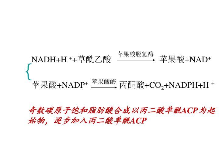 苹果酸脱氢酶