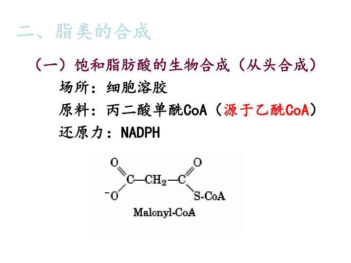 二、脂类的合成