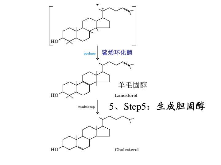 鲨烯环化酶