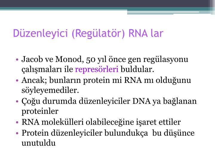 Düzenleyici (Regülatör) RNA lar