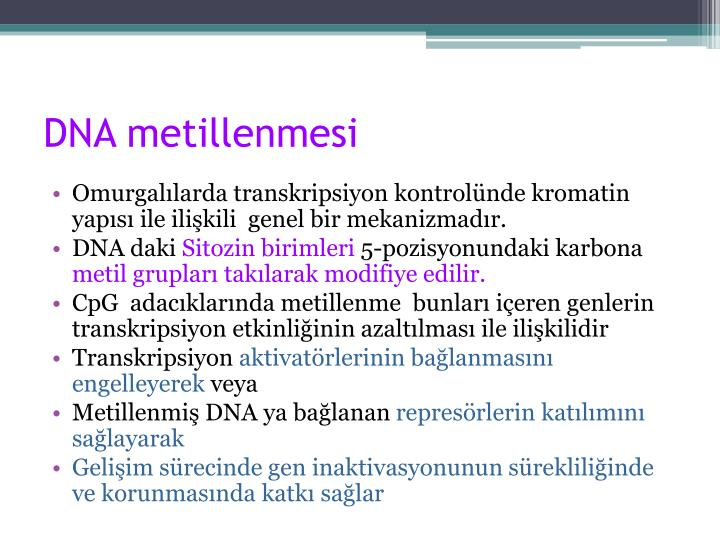 DNA metillenmesi