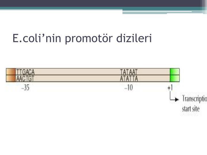 E.coli'nin promotör dizileri