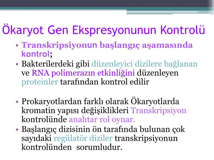 Ökaryot Gen Ekspresyonunun Kontrolü