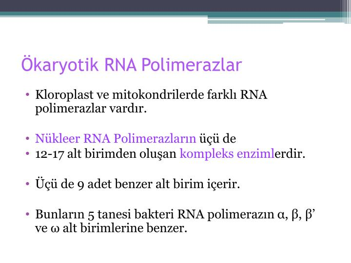 Ökaryotik RNA Polimerazlar
