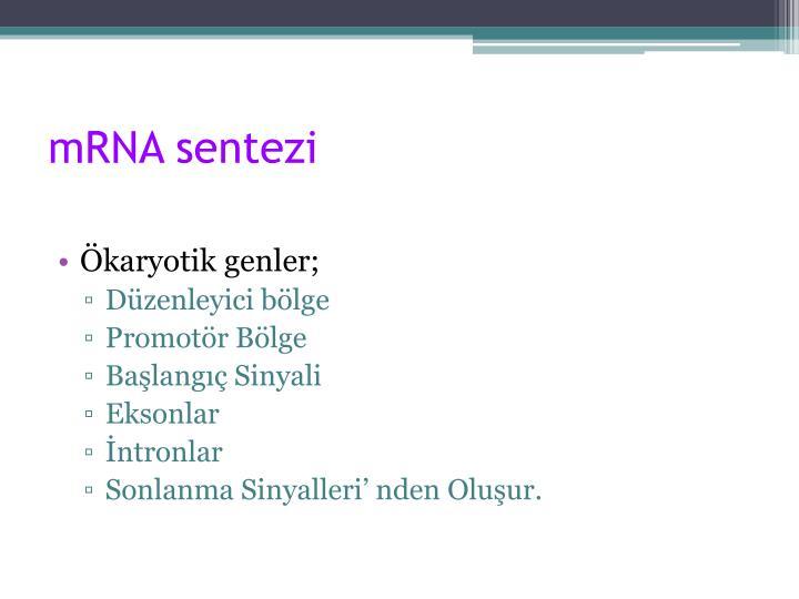 mRNA sentezi
