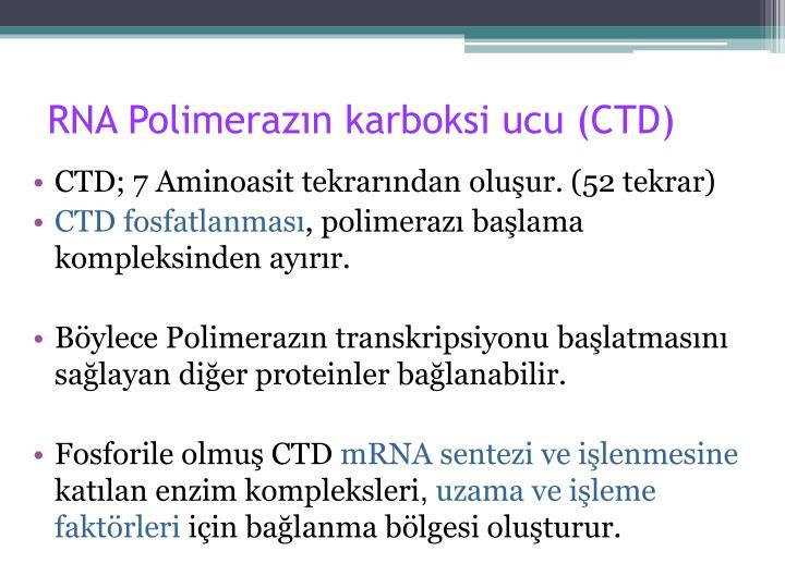RNA Polimerazın karboksi ucu (CTD)