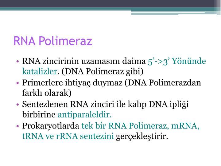 RNA Polimeraz