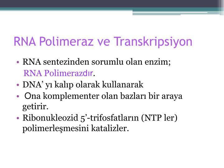 RNA Polimeraz ve Transkripsiyon