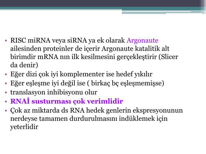 RISC miRNA veya siRNA ya ek olarak