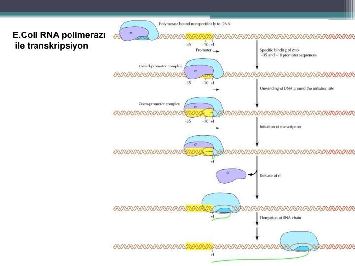 E.Coli RNA polimerazı