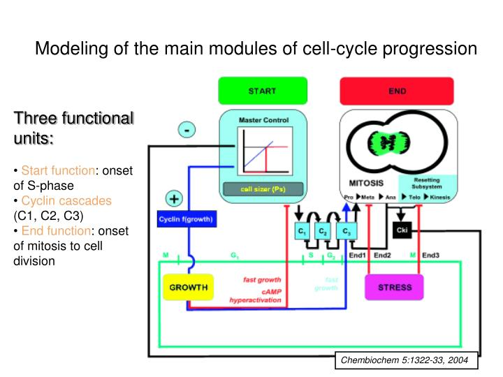 Modeling of the main modules of cell-cycle progression