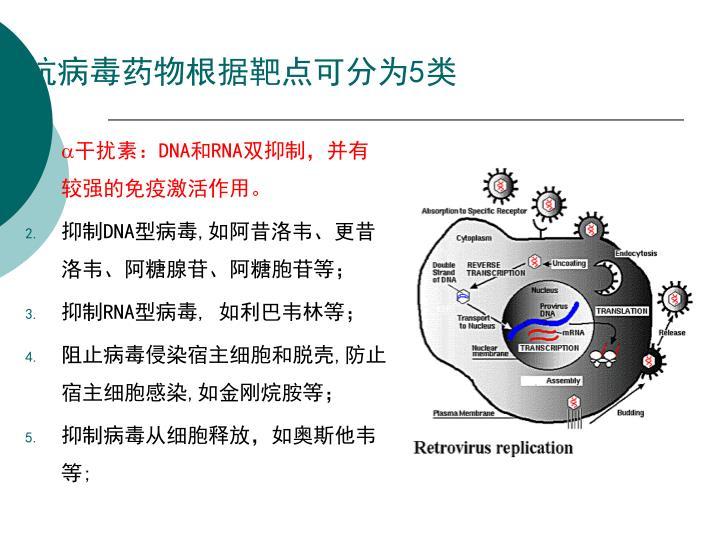 抗病毒药物根据靶点可分为