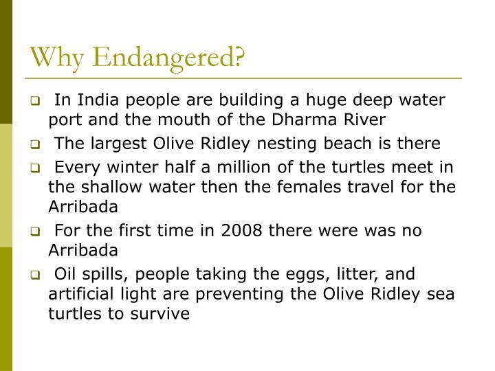 Why Endangered?