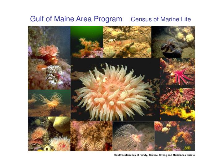 Gulf of Maine Area Program