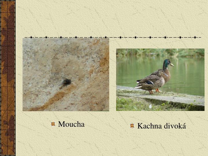 Moucha